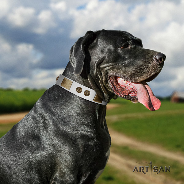 Great Dane everyday walking leather collar with adornments for your pet