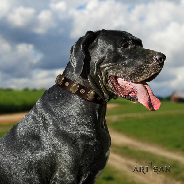 Great Dane easy wearing full grain leather collar with embellishments for your canine