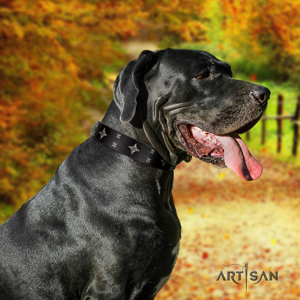 Great Dane everyday use natural leather collar with adornments for your canine