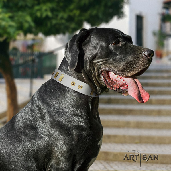 Great Dane fancy walking full grain genuine leather collar with studs for your dog