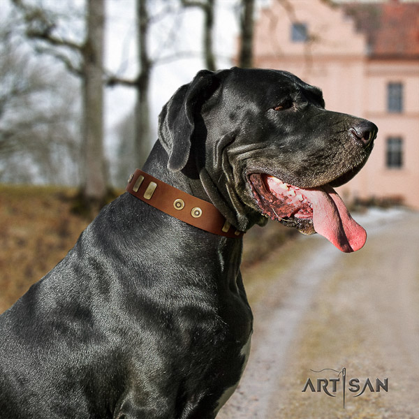 Great Dane comfortable wearing genuine leather collar with embellishments for your pet