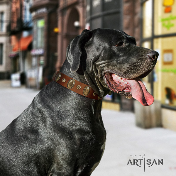 Great Dane comfortable wearing full grain leather collar with studs for your canine