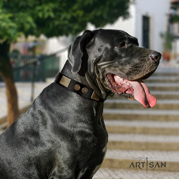 Great Dane daily use full grain genuine leather collar with embellishments for your four-legged friend