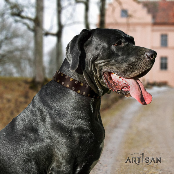 Great Dane stylish walking full grain genuine leather collar with studs for your canine