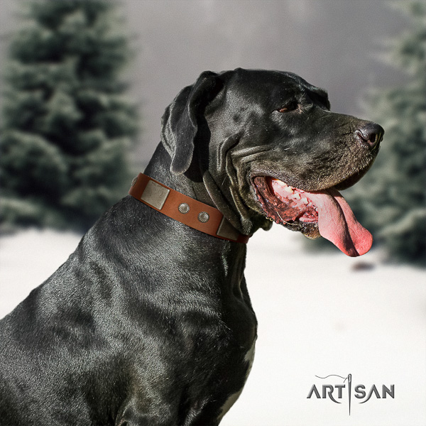 Great Dane comfy wearing full grain natural leather collar for your stylish pet