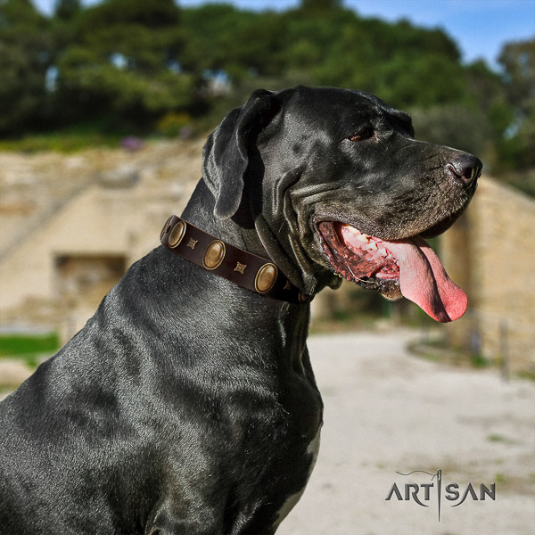 Great Dane everyday use full grain natural leather collar with decorations for your four-legged friend