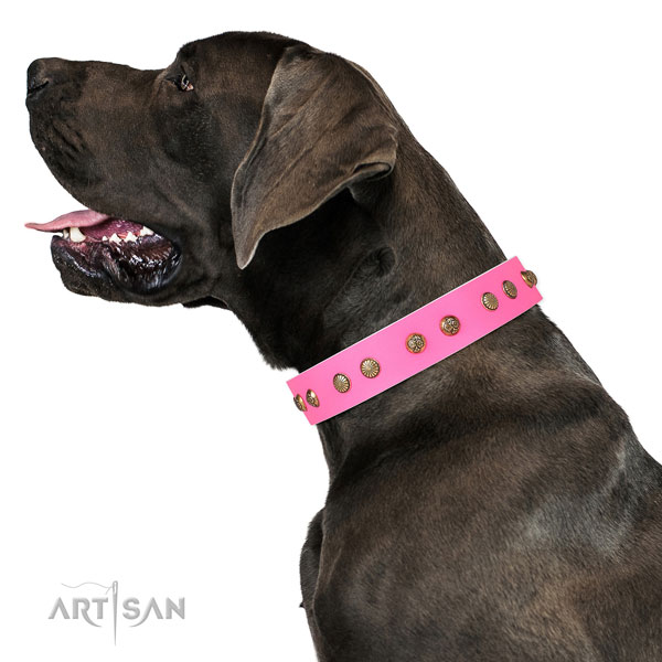Great Dane exquisite full grain leather dog collar for daily walking