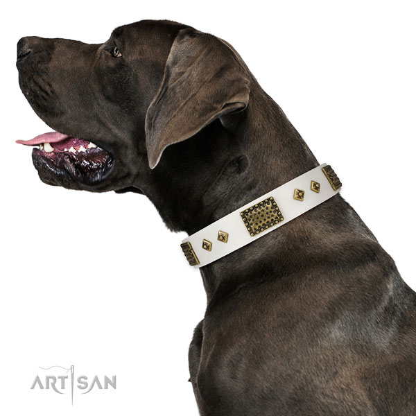 Great Dane fine quality full grain natural leather dog collar for daily walking