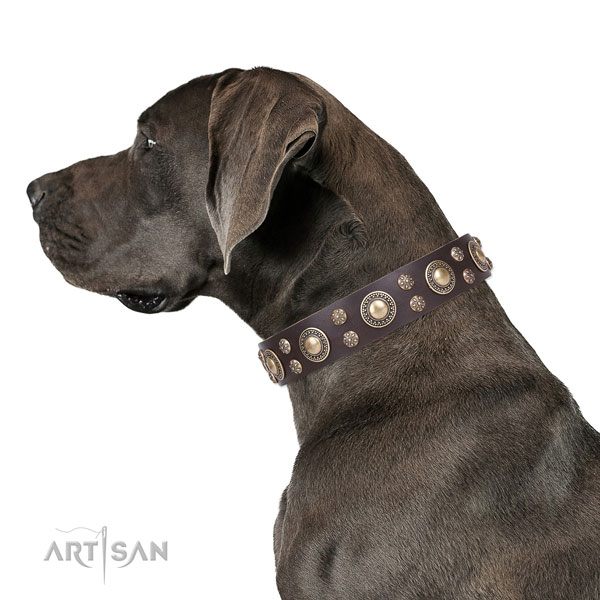 Great Dane exceptional full grain natural leather dog collar for everyday walking