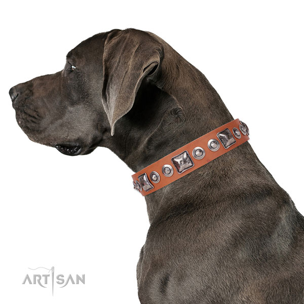 Great Dane handcrafted full grain genuine leather dog collar for walking