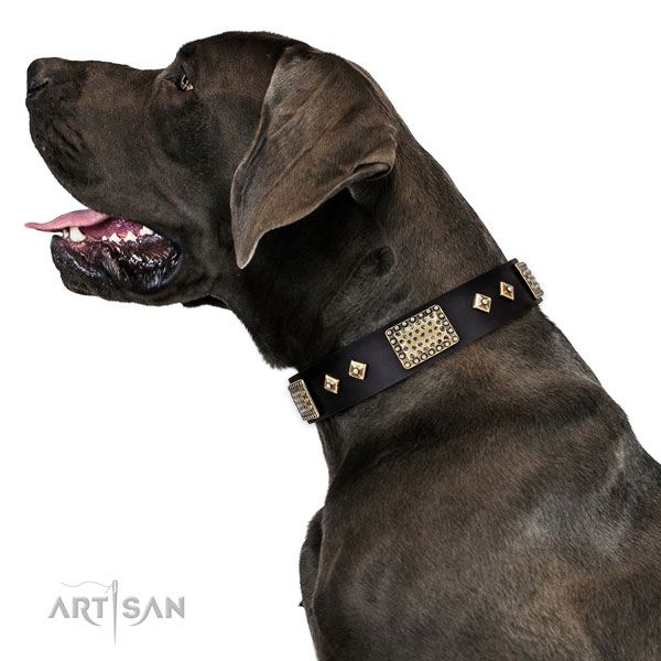 Great Dane stylish full grain natural leather dog collar for comfortable wearing