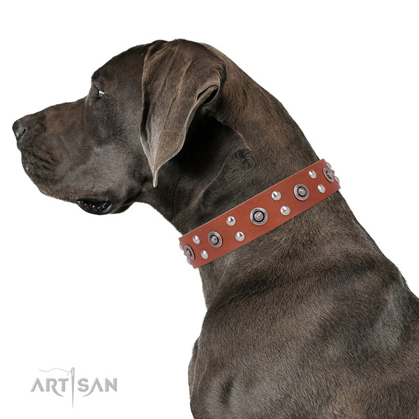 Great Dane stunning full grain natural leather dog collar for everyday walking