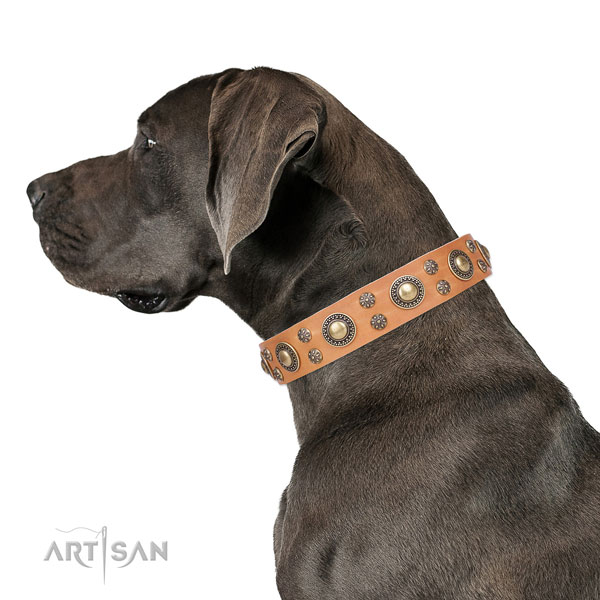 Great Dane stylish design full grain natural leather dog collar for comfy wearing
