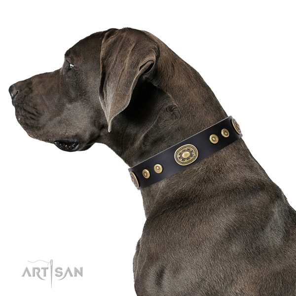 Great Dane best quality natural genuine leather dog collar for easy wearing