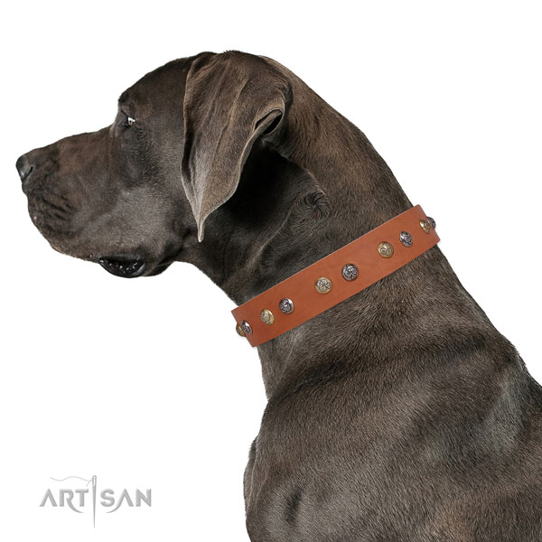 Great Dane handmade full grain natural leather dog collar for comfy wearing