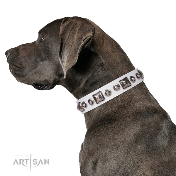 Great Dane awesome full grain genuine leather dog collar for comfy wearing