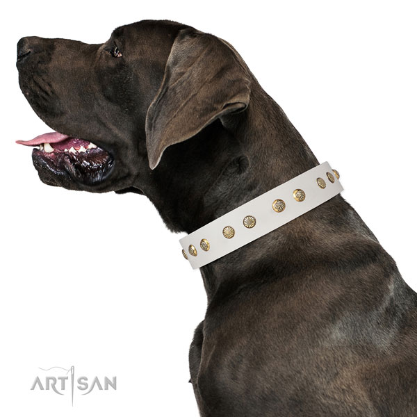 Great Dane inimitable full grain leather dog collar for handy use