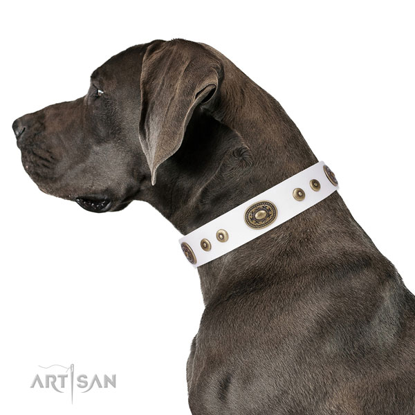 Great Dane stylish full grain genuine leather dog collar for comfy wearing