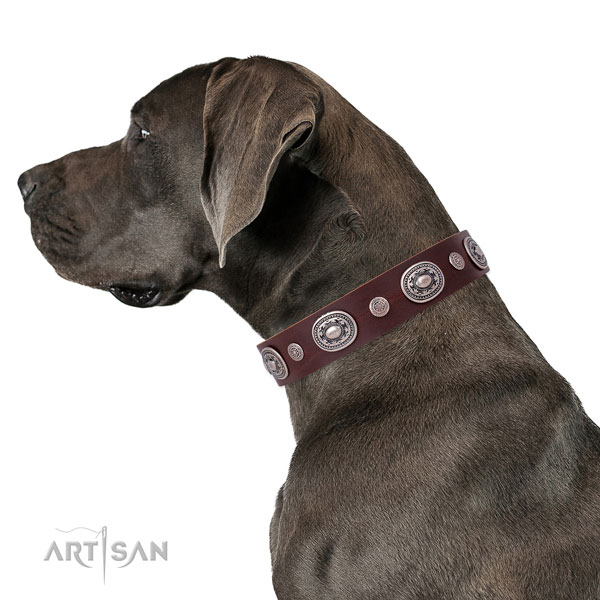 Great Dane inimitable full grain natural leather dog collar for daily use