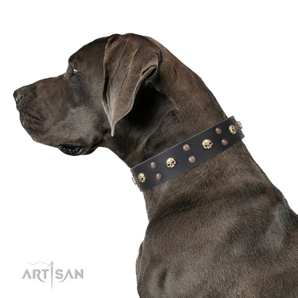 Great Dane trendy genuine leather dog collar for stylish walking