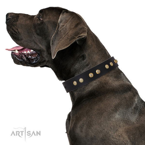 Great Dane adjustable genuine leather dog collar for daily use