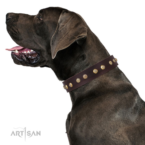 Great Dane easy adjustable genuine leather dog collar for everyday walking