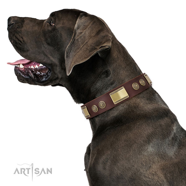 Great Dane fine quality full grain leather dog collar for walking