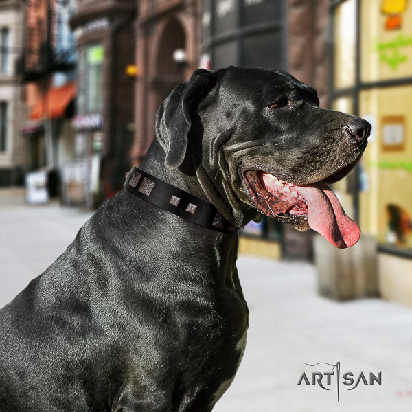 Great Dane fancy walking full grain genuine leather collar with adornments for your pet