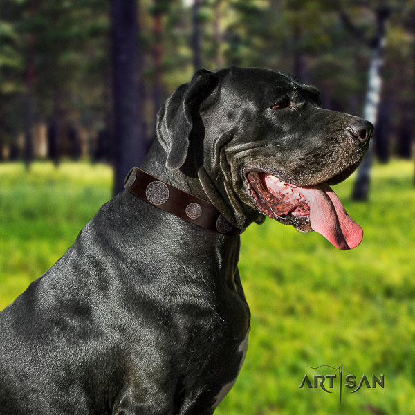 Great Dane everyday walking genuine leather collar with studs for your doggie
