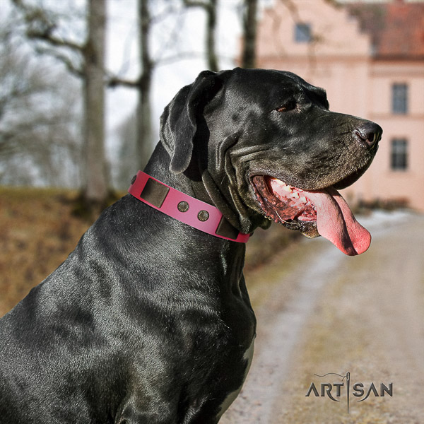 Great Dane comfortable wearing full grain natural leather collar for your impressive pet
