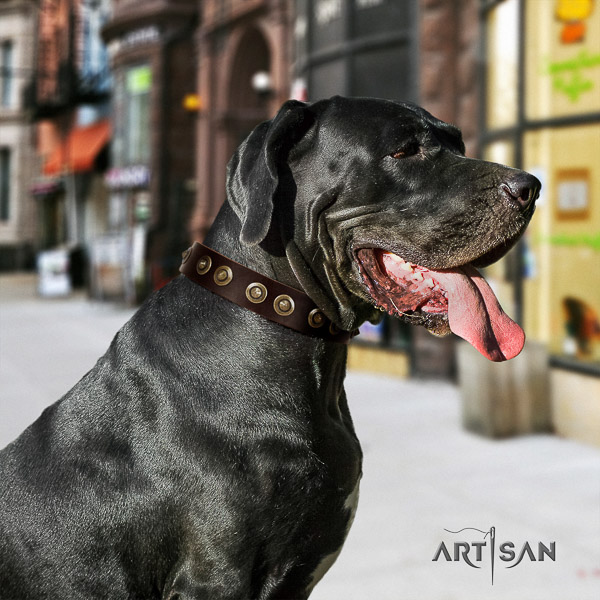 Great Dane daily walking natural leather collar with studs for your dog