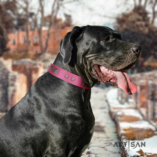Great Dane fancy walking full grain natural leather collar with studs for your doggie