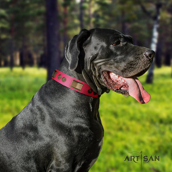 Great Dane best quality collar with fashionable adornments for your pet