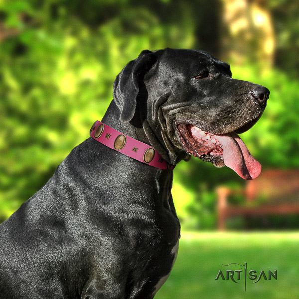 Great Dane comfy wearing natural leather collar with adornments for your dog
