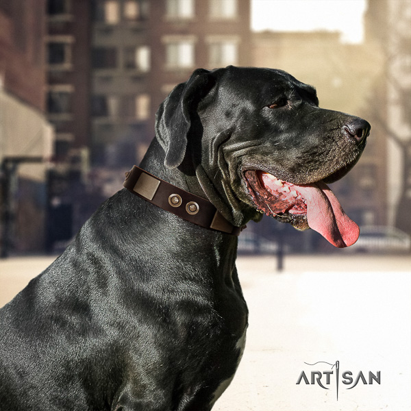 Great Dane daily walking leather collar for your impressive pet