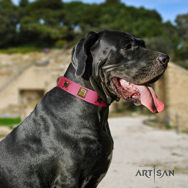 Great Dane easy wearing genuine leather collar with studs for your canine