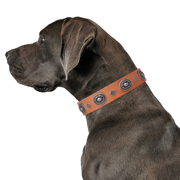 Great Dane stylish full grain leather dog collar for everyday use