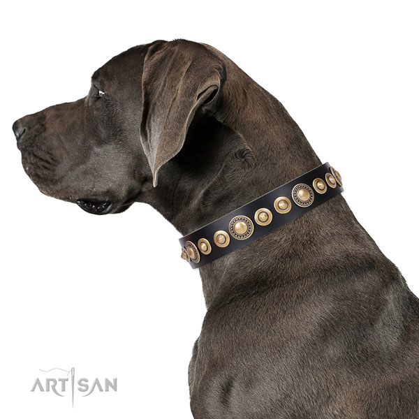 Great Dane easy to adjust full grain natural leather dog collar for stylish walking
