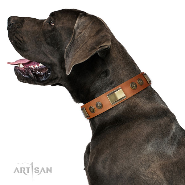 Great Dane stylish full grain genuine leather dog collar for walking