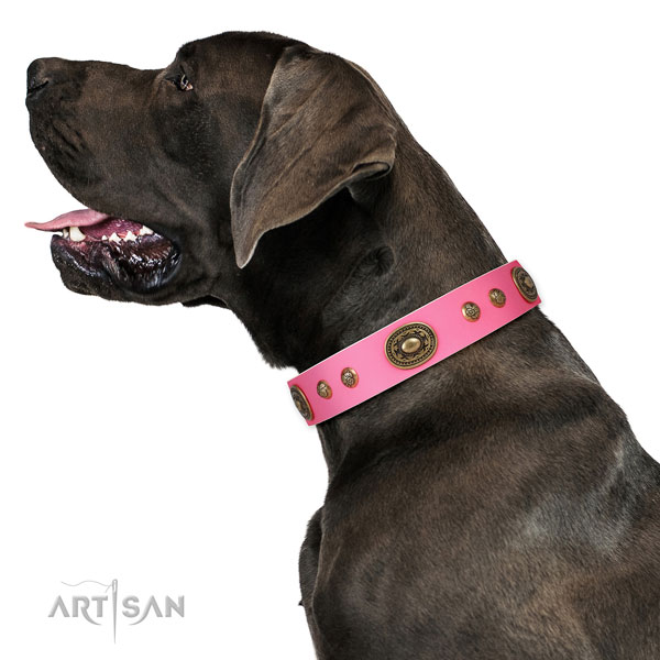 Great Dane fashionable full grain genuine leather dog collar for everyday walking