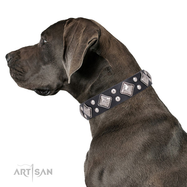 Great Dane amazing full grain natural leather dog collar for handy use