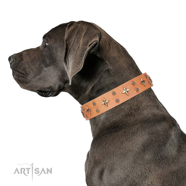 Great Dane adorned full grain genuine leather dog collar for basic training