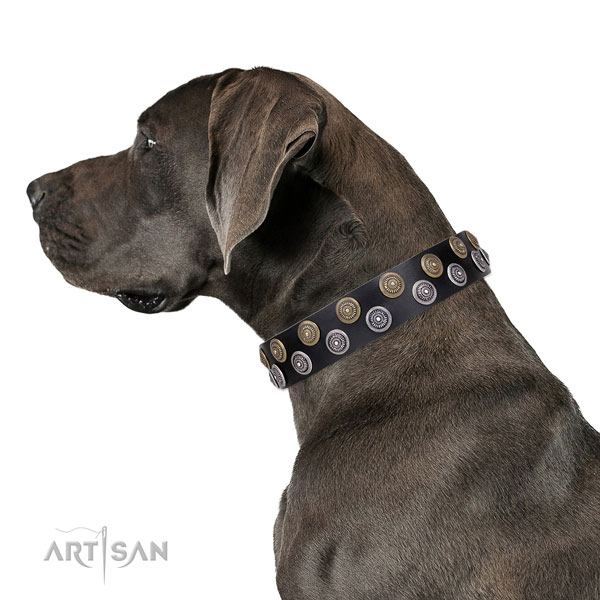 Great Dane embellished full grain genuine leather dog collar for fancy walking