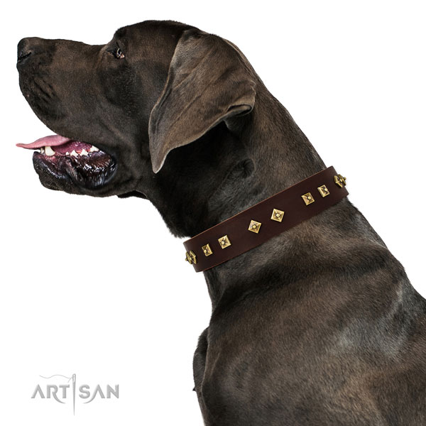 Great Dane handcrafted natural genuine leather dog collar for daily walking