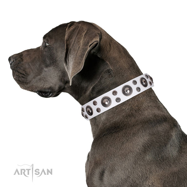 Great Dane fashionable full grain natural leather dog collar for walking