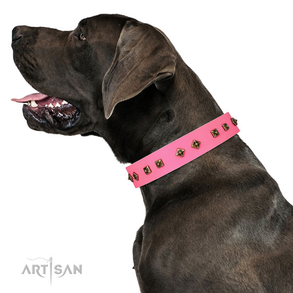 Great Dane easy wearing leather dog collar for stylish walking