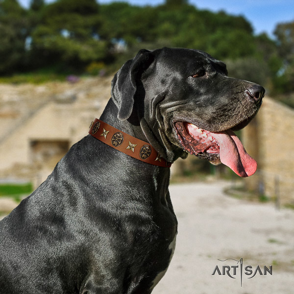 Great Dane fancy walking natural leather collar with adornments for your dog