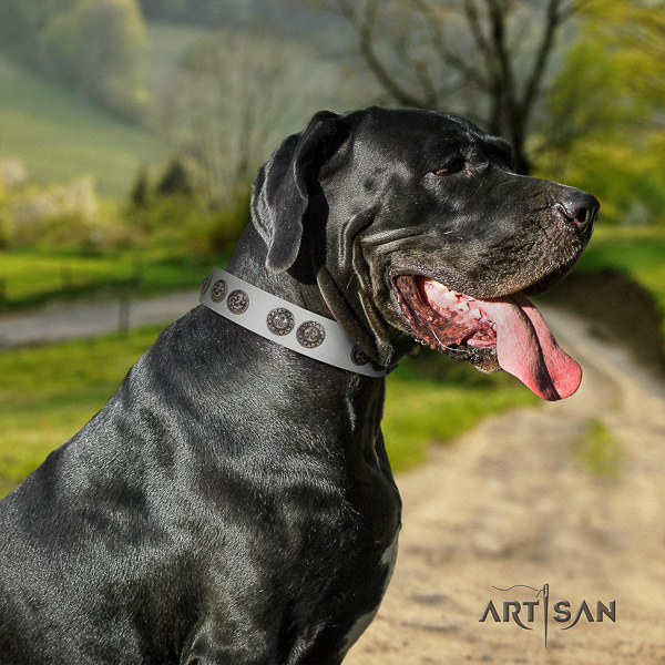 Great Dane walking full grain genuine leather collar with adornments for your pet