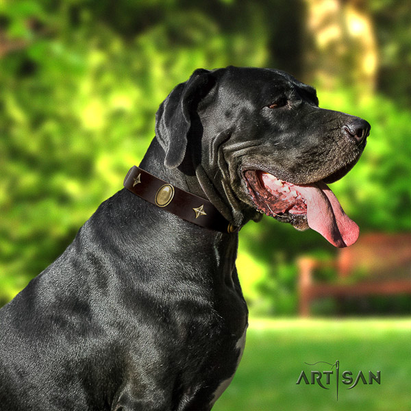 Great Dane everyday walking full grain natural leather collar with studs for your four-legged friend