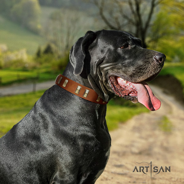 Great Dane stylish walking full grain leather collar with adornments for your doggie